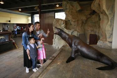 【香港海洋公園】海獅約會之旅