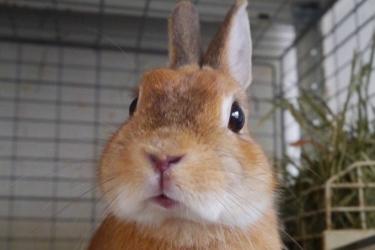 【東京寵物體驗】原宿兔兔咖啡廳