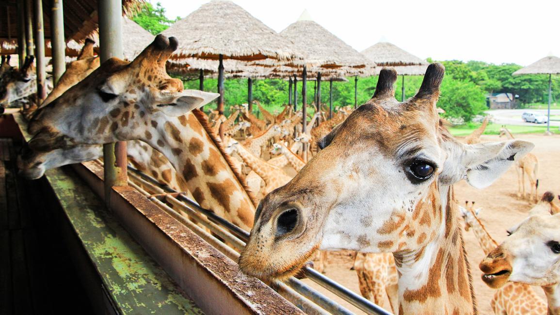 Vườn Thú Bangkok Safari World | Blog KKday Việt Nam