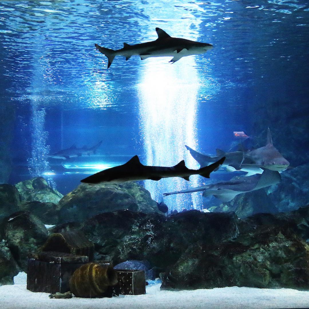 Seoul Coex Aquarium Ticket Kkday Thailand Et Sea Life Ocean World Only Child Kingdom Coral Desk