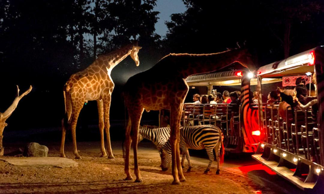 Image result for chiang mai night safari
