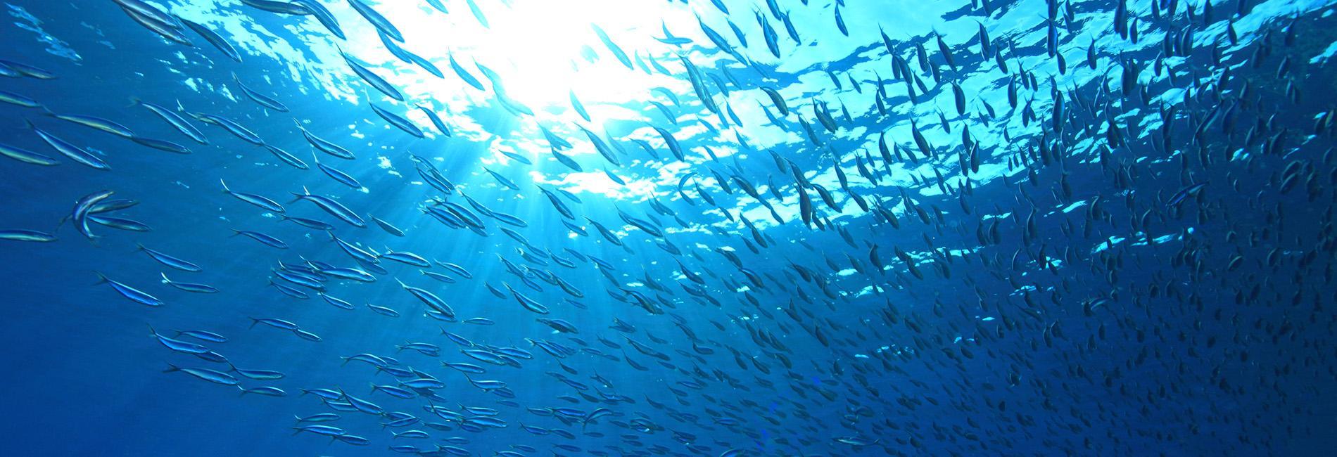 """Snorkeling, Turtle Bay, Sardine Run and Kawasan Falls at Moalboal Cebu"""""""