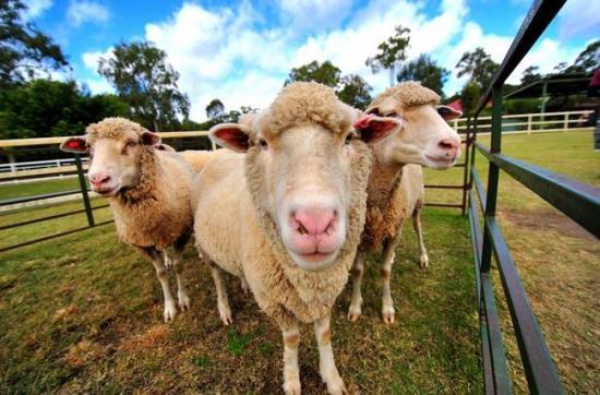 天堂農莊paradise country的圖片搜尋結果