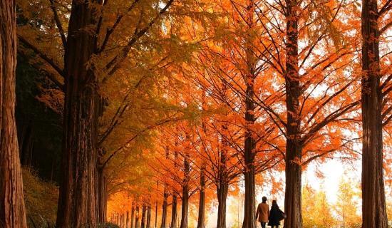 Mudeungsan du lịch mùa thu Hàn Quốc