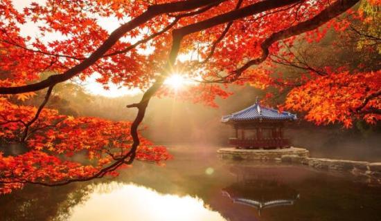 Mùa thu Hàn Quốc núi Naejangsan