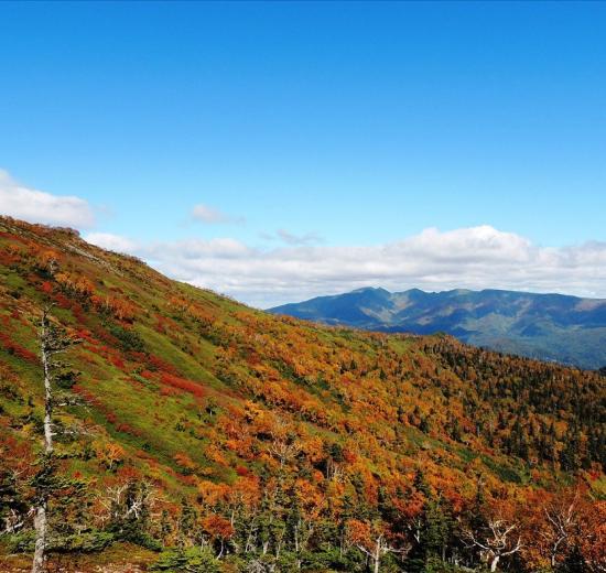 北海道紅葉