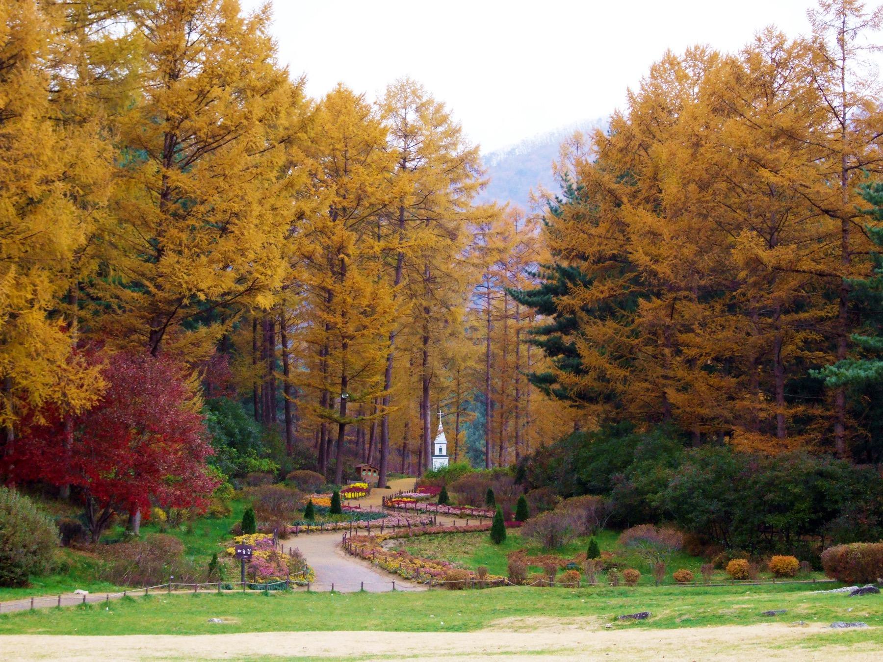 首爾近郊 晨靜樹木園