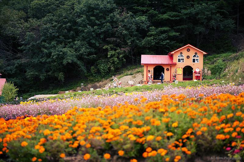 首爾近郊 香草島樂園