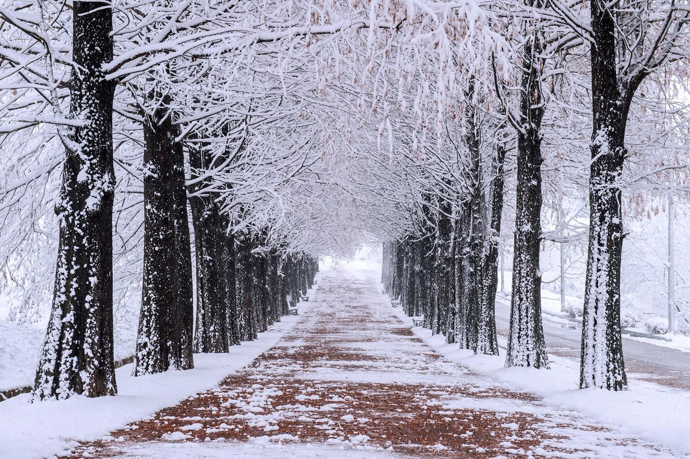首爾近郊 南怡島(冬天)