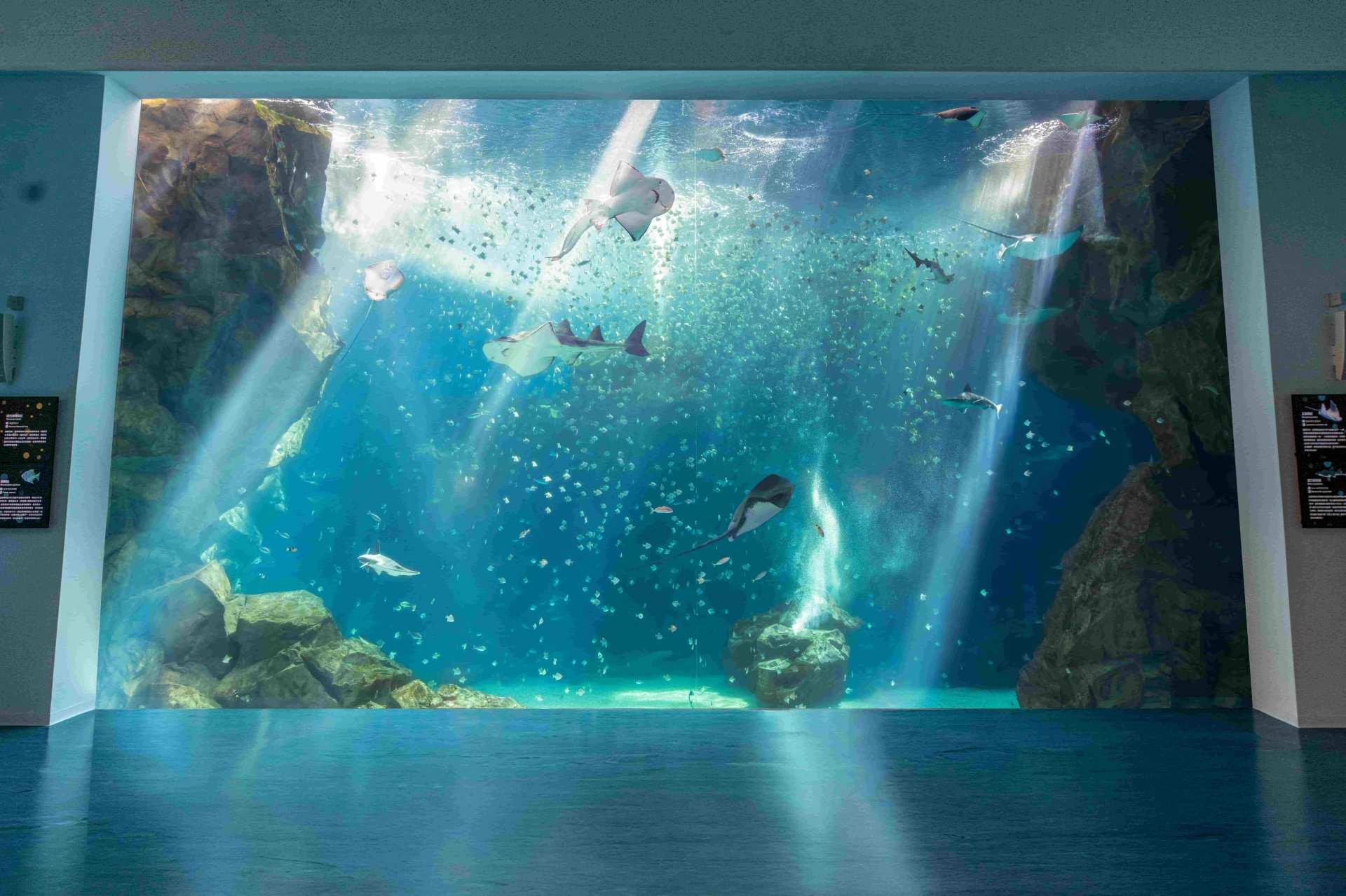 台湾・桃園 都市型水族館 Xpark(エックスパーク)入場チケット