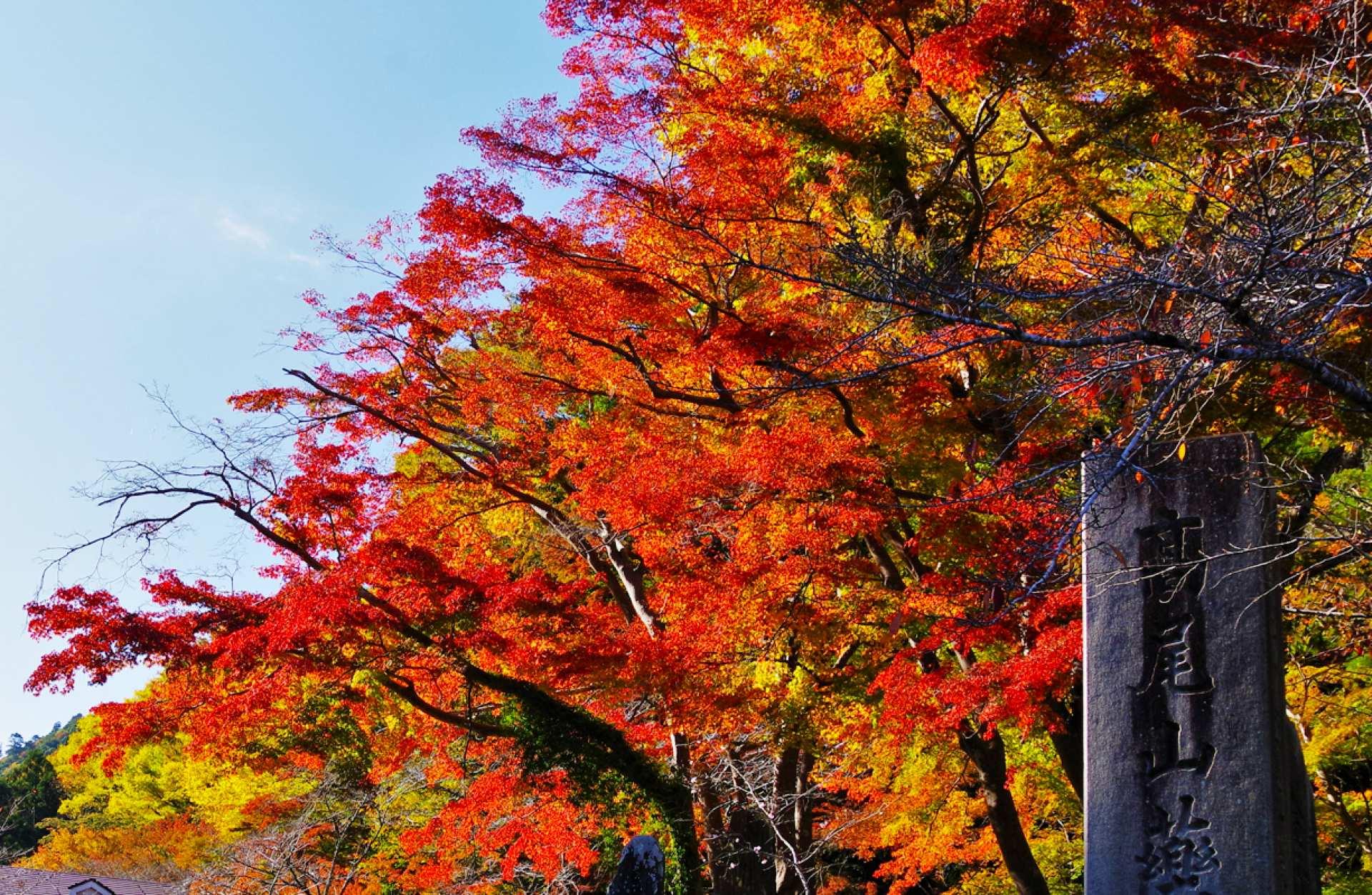 東京発|高尾山・紅葉レッキングツアー|天然温泉入浴付き
