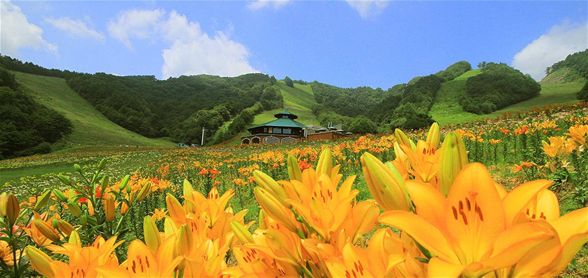 【大阪巴士一日遊】向日葵花海、箱館山百合園、海鮮燒烤吃到飽