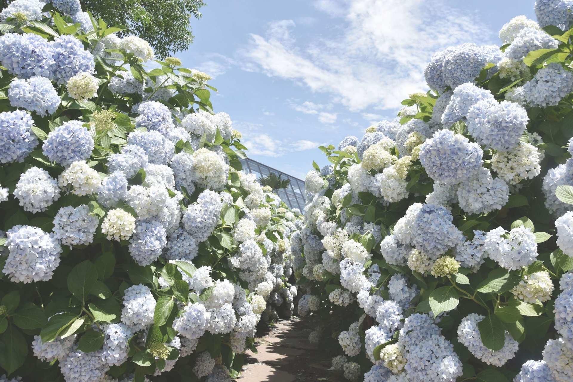 【濟州外拍私房景點】山茶花之丘(Camellia Hill)門票