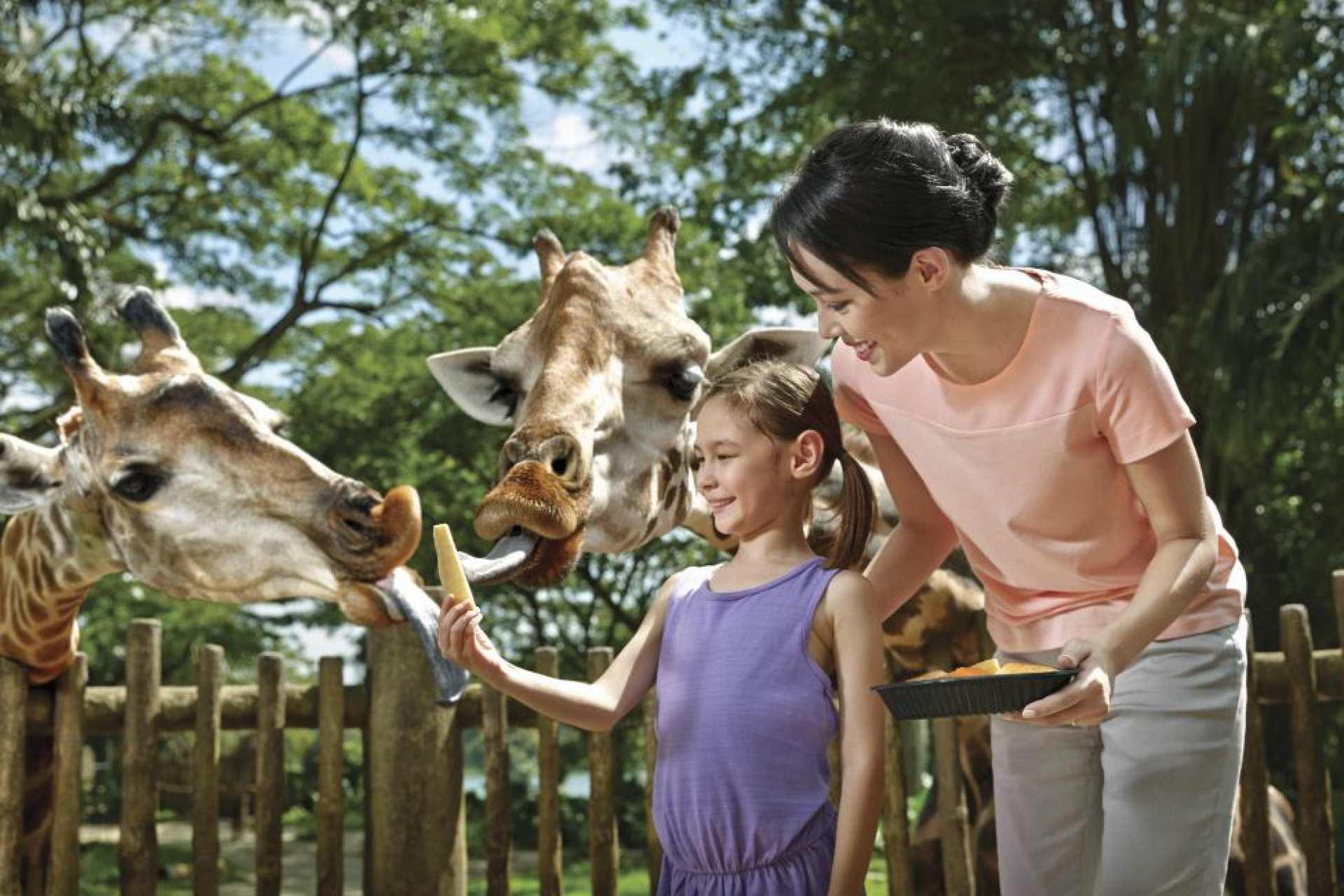 シンガポール動物園(Singapore Zoo)入場チケット:オフィシャル公認販売