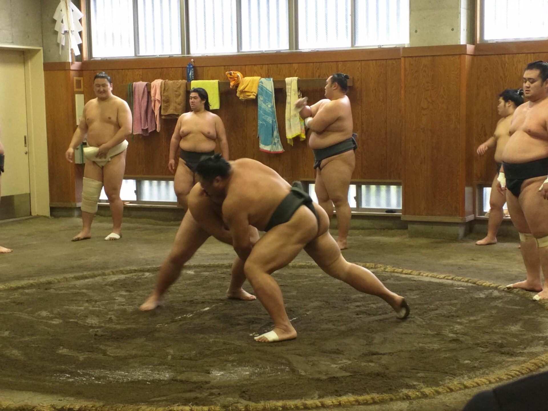 【東京文化體驗】觀賞相撲選手的晨間練習