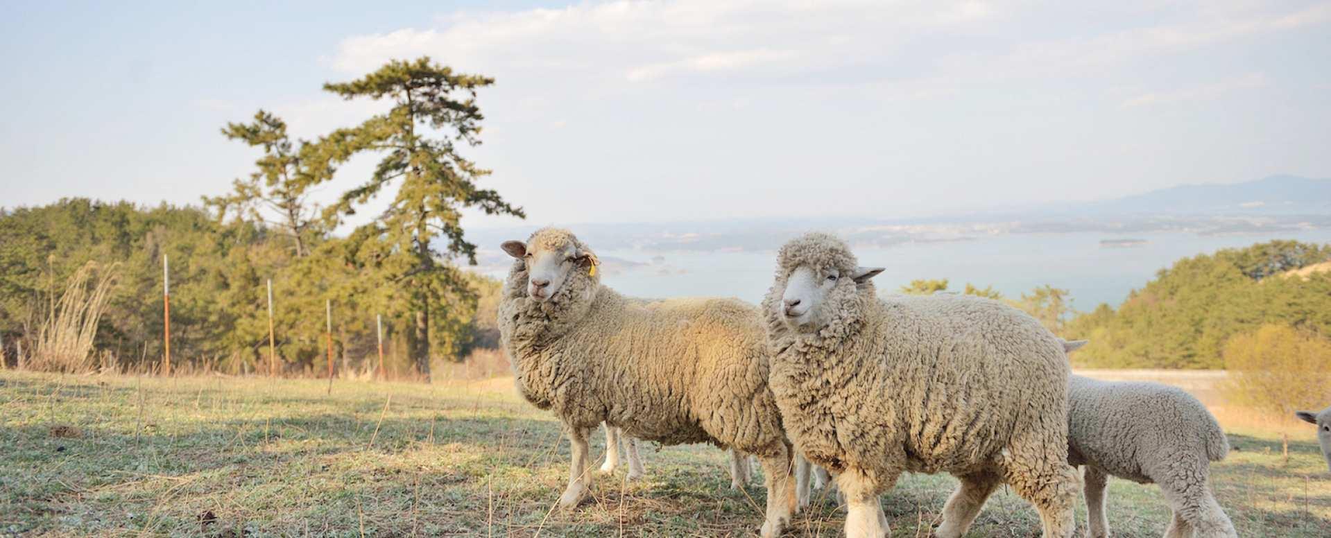 【韓國南海一日遊】錦山菩提庵、加川梯田村、南海羊牧場(釜山出發)