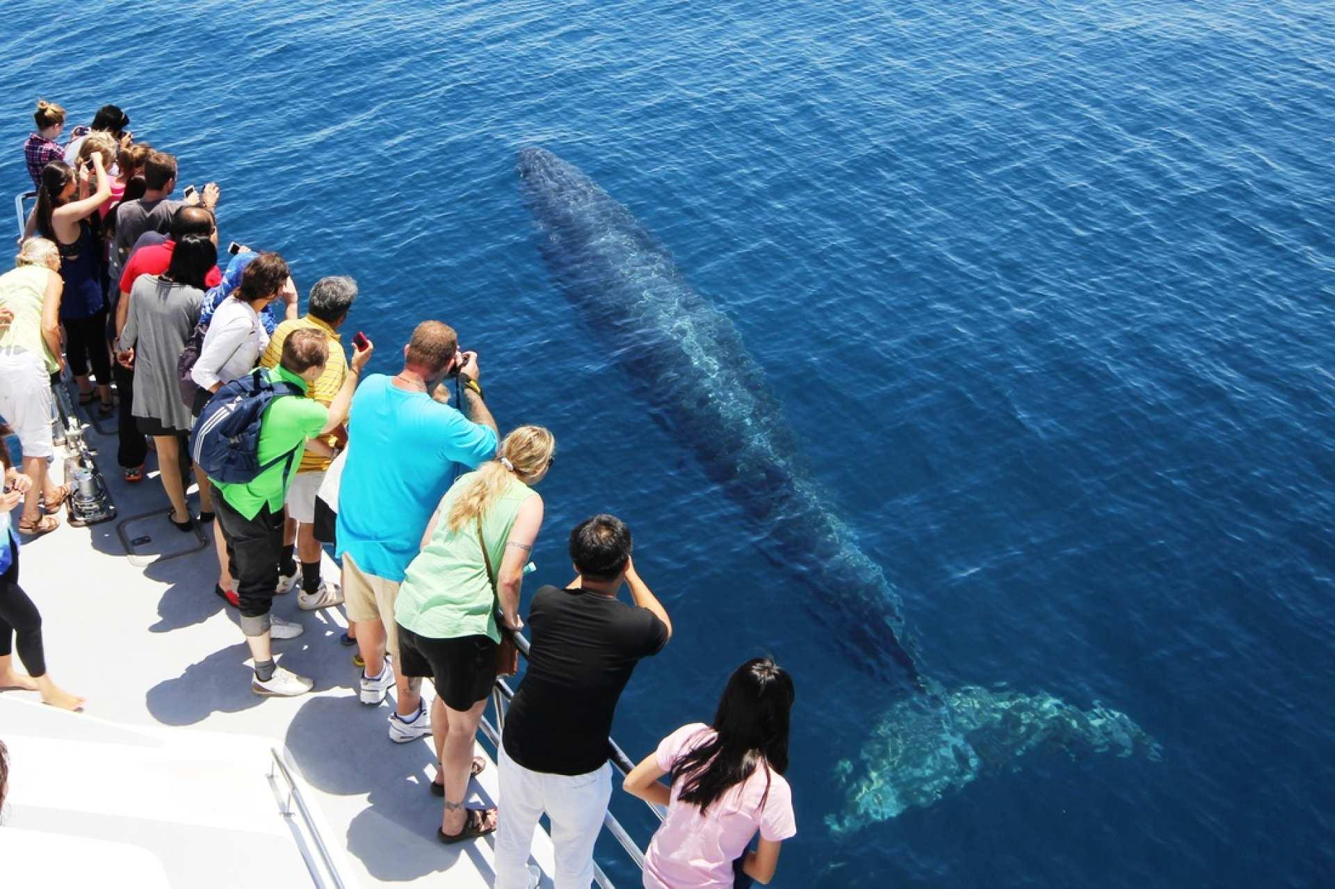 【紐西蘭海洋生態巡航】奧克蘭豪拉基灣賞鯨半日遊