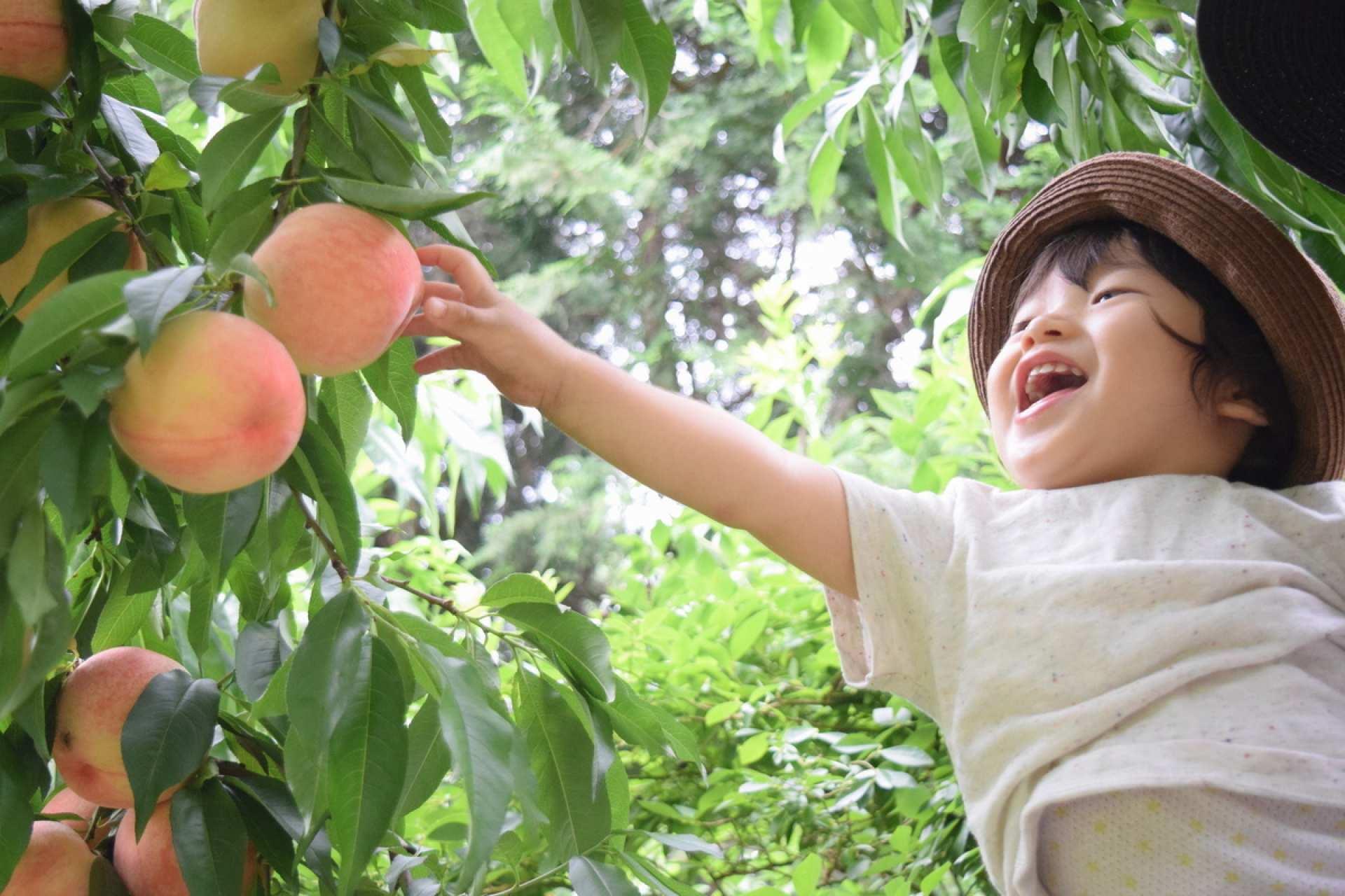 【大阪近郊一日遊】倉敷美觀、佐用町向日葵花田、體驗採桃