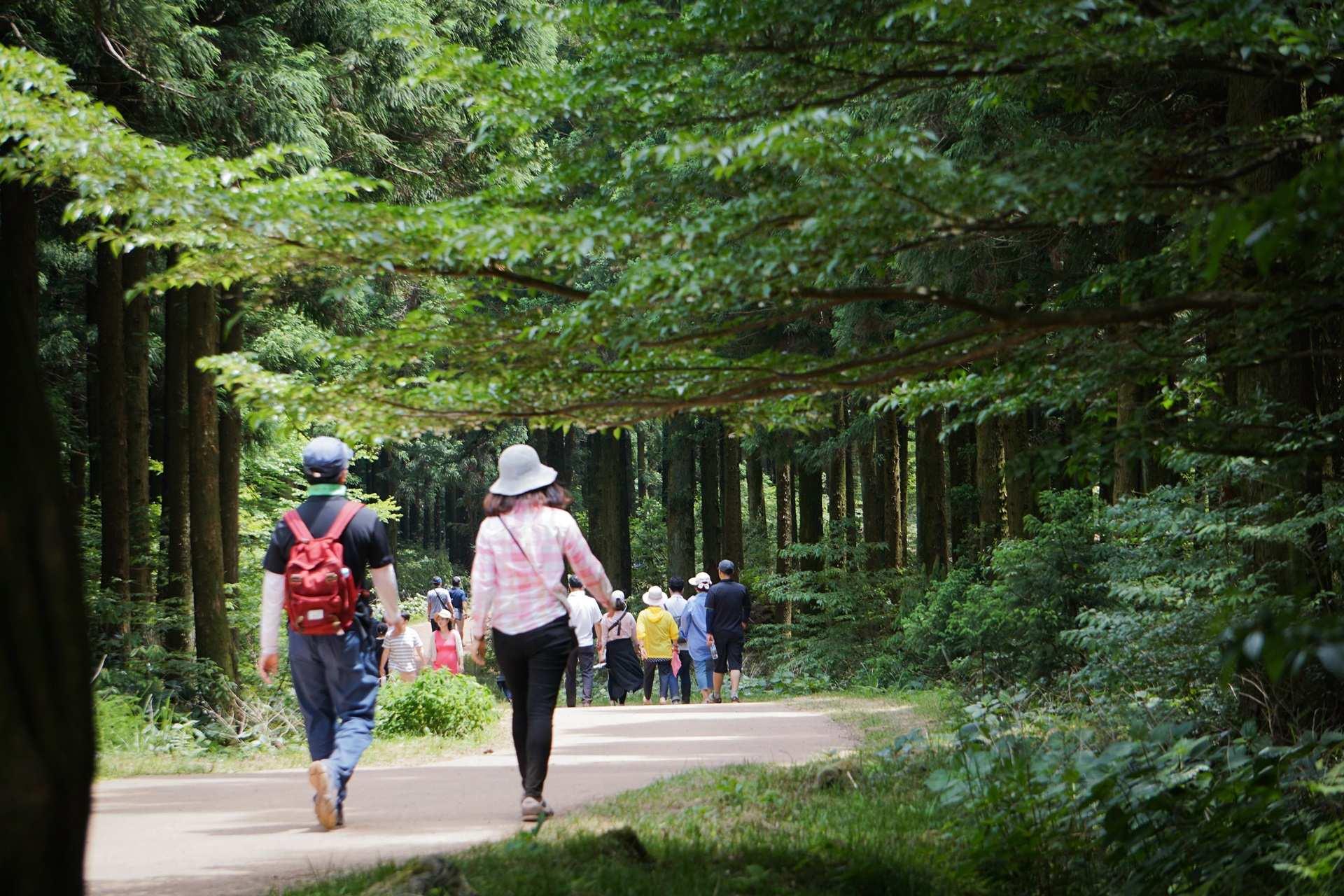 【濟州童話森林】思連伊林蔭道+濟州鐵道自行車+騎馬體驗+瑞士村