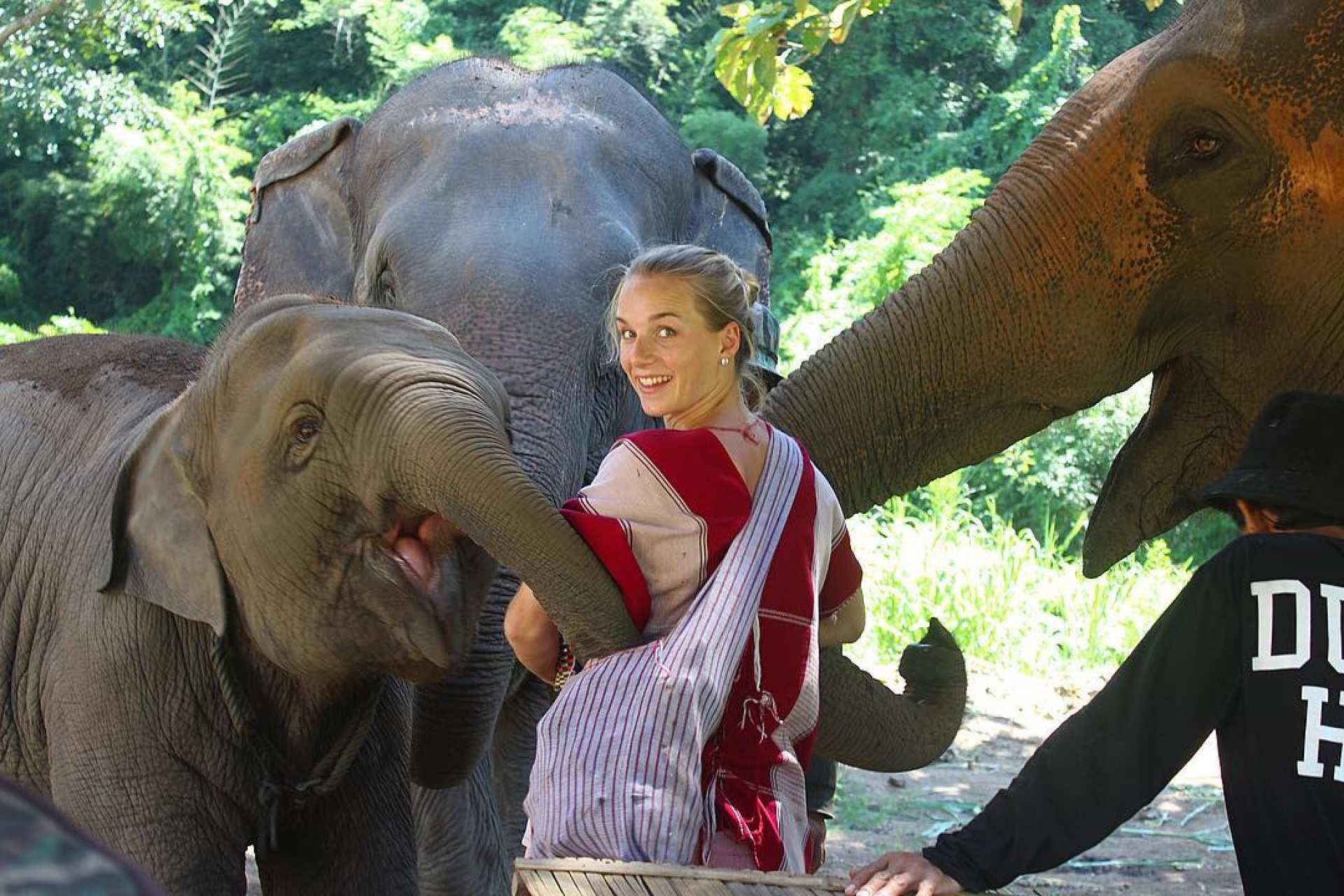 【清邁大象保育體驗】Kerchor 大象生態公園半日遊