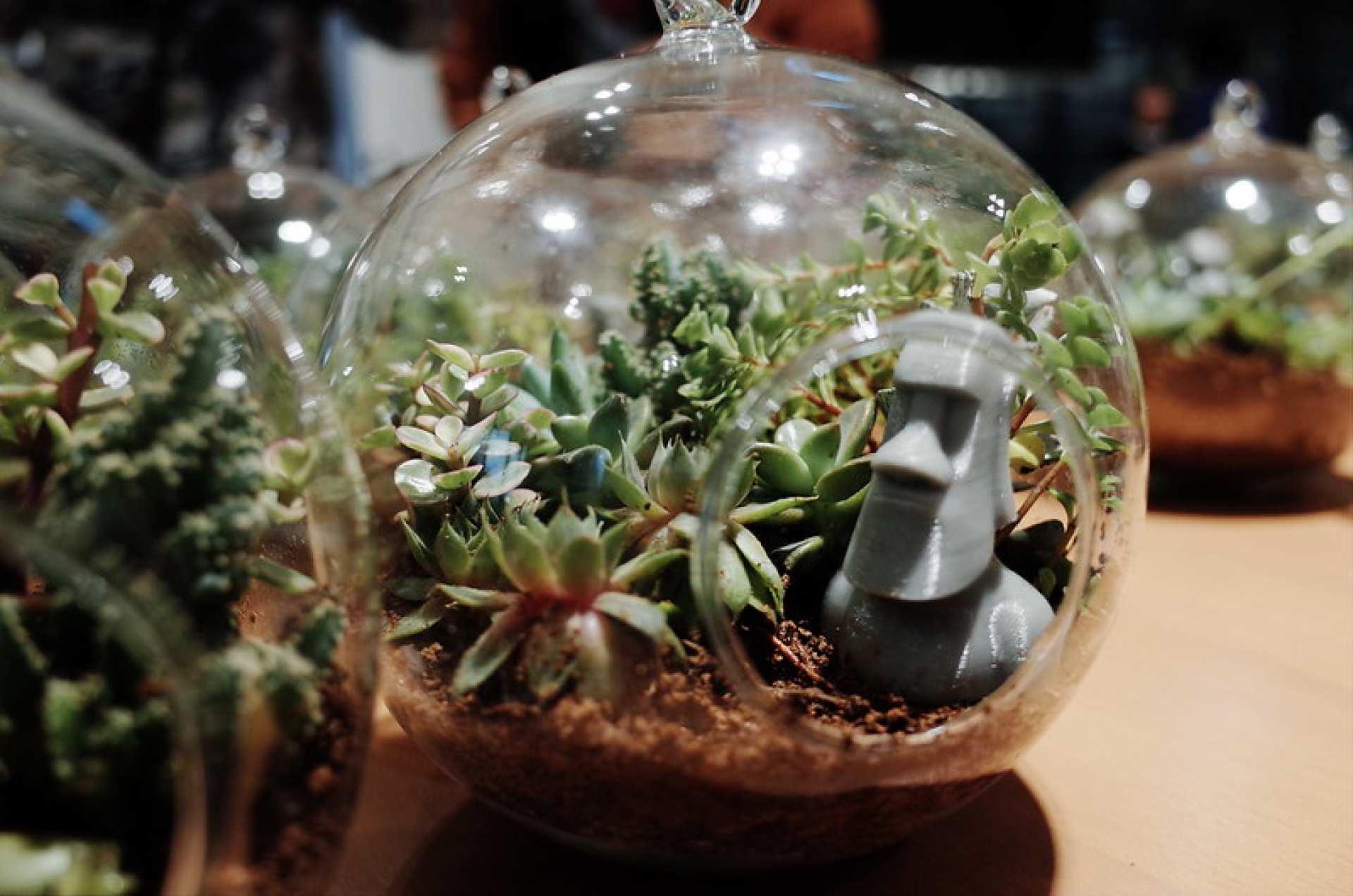 【品品學堂手作體驗】微景設計 摩艾多肉植物復活島手作體驗活動