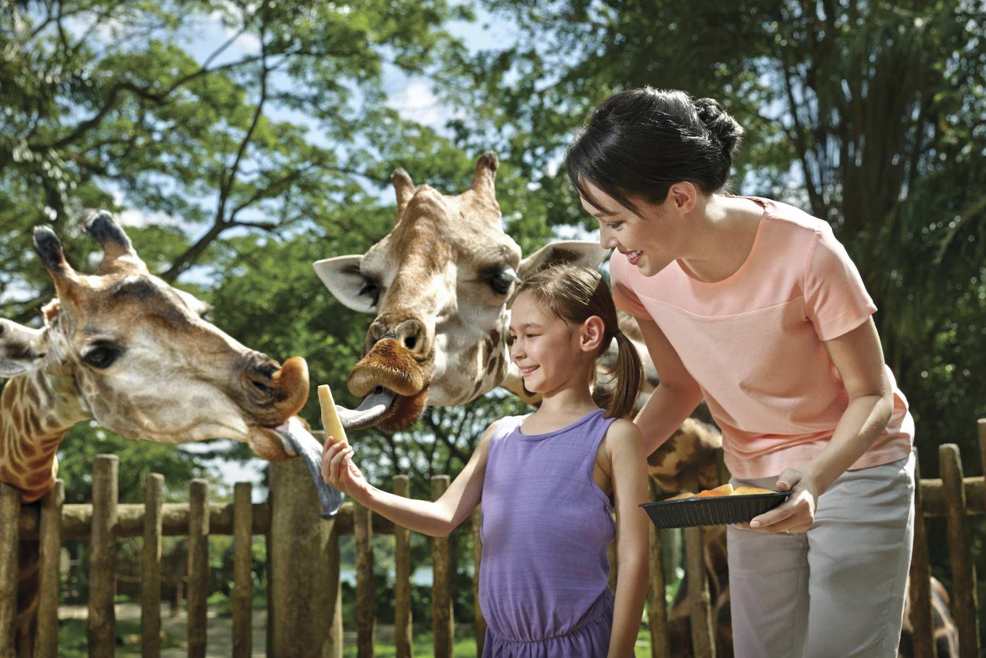 【超值親子套票:自然生態】新加坡河川生態園、動物園、S.E.A. 海洋館門票