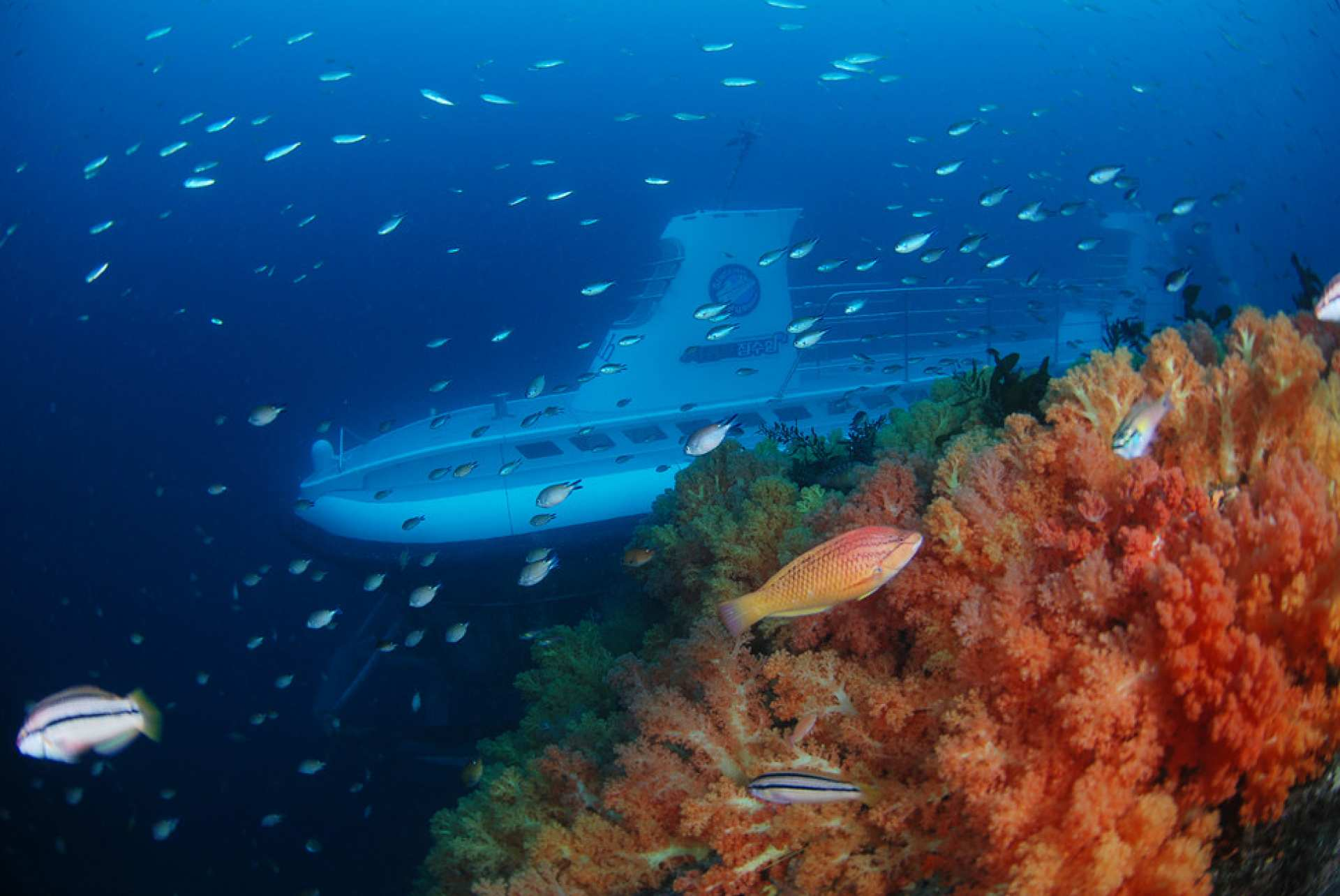【絕美海底秘境】濟州島西歸浦潛水艇體驗