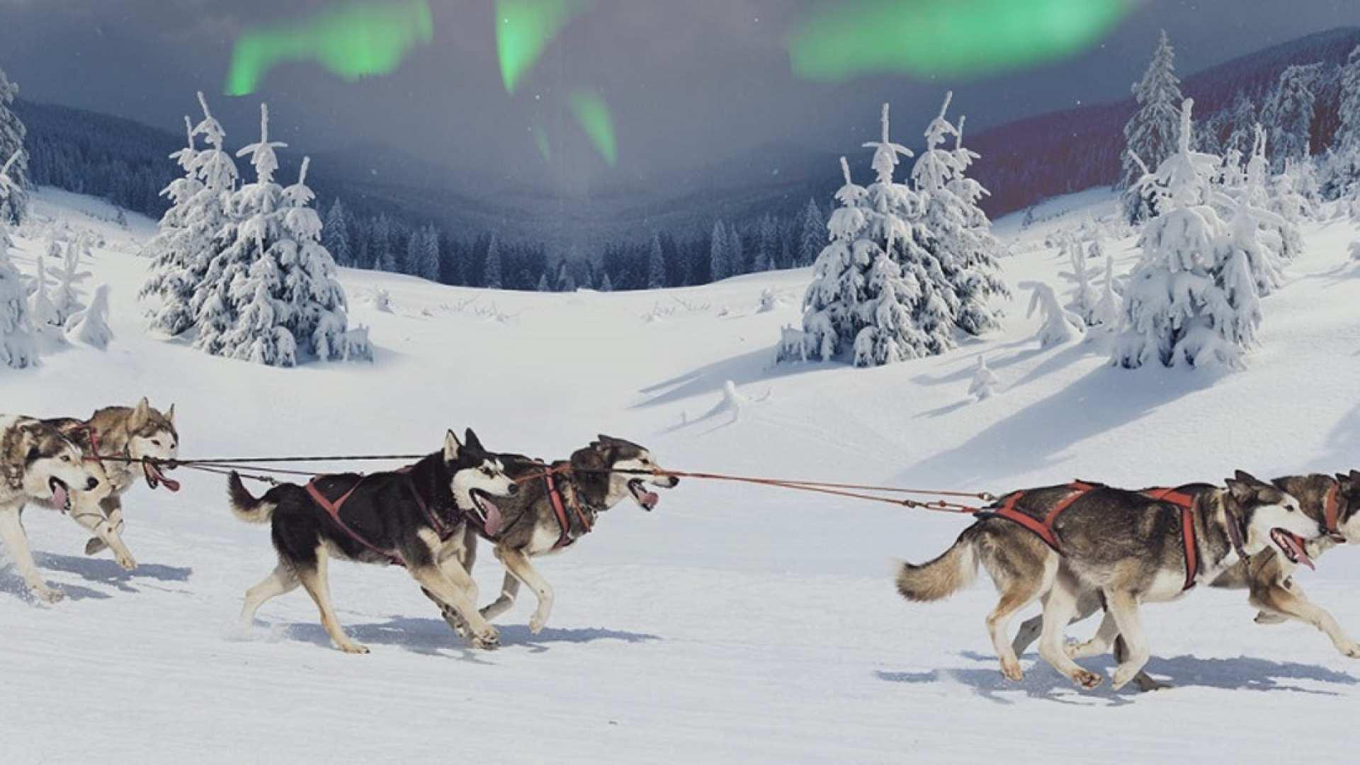 【芬蘭搭乘哈士奇雪橇賞極光】北極圈哈士奇農場+哈士奇雪橇體驗+拉普蘭特色小吃半日遊