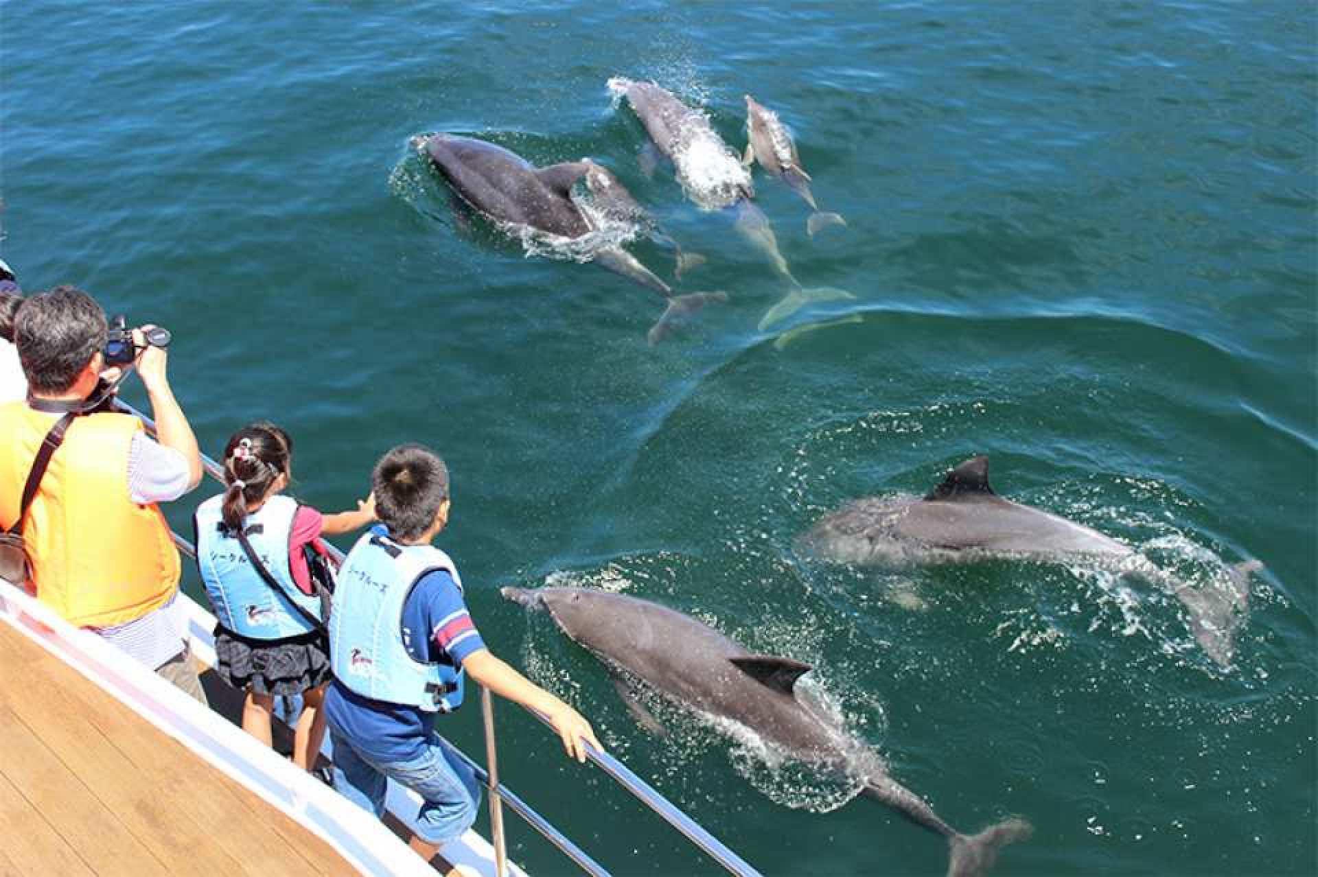 九州・熊本|野生のイルカウォッチングと海を見ながらバーベキュー体験プラン