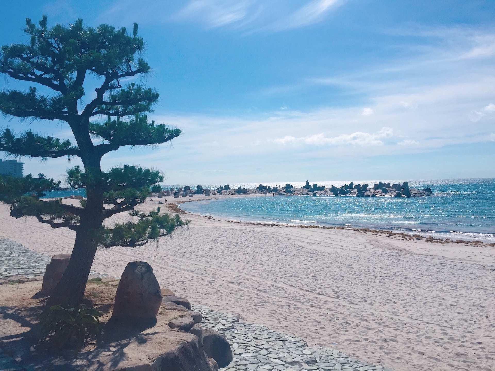 和歌山日帰りツアー|紀三井寺・とれとれ市場・橋杭岩・白浜海岸|大阪出発