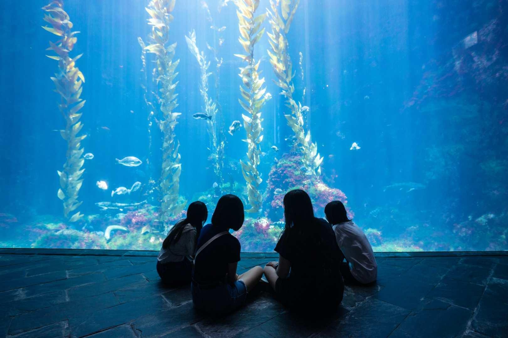 【割引価格】台湾屏東・墾丁 国立海洋生物博物館 割引入場チケット 台湾最大の水族館