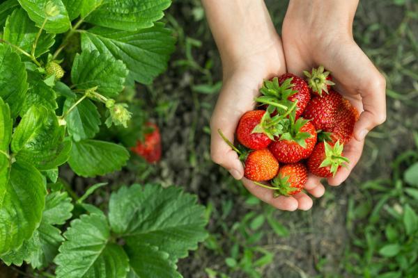 【【冬遊首爾近郊】現採有機草莓、南怡島、小法國村、晨靜樹木園