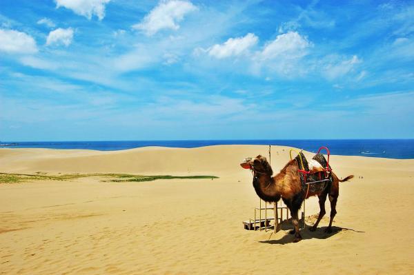 【【大阪巴士一日遊】鳥取砂丘、浦富海岸巡航、砂之美術館、採梨子體驗