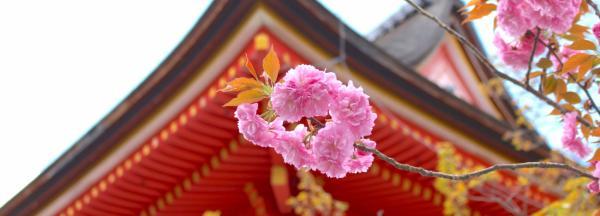 【【京都巴士一日遊】品味古典京都:清水寺、三十三間堂、嵐山、金閣寺