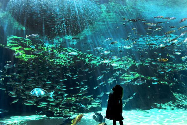 【【九州海遊趣】九十九島水族館 \/ 遊覧船體驗,海灣美景一網打盡