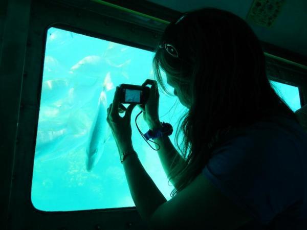 【【到海底看珊瑚礁】墾丁後壁湖半潛艇體驗