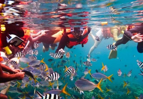 【【與熱帶魚的親密接觸】墾丁後壁湖浮潛驚喜體驗