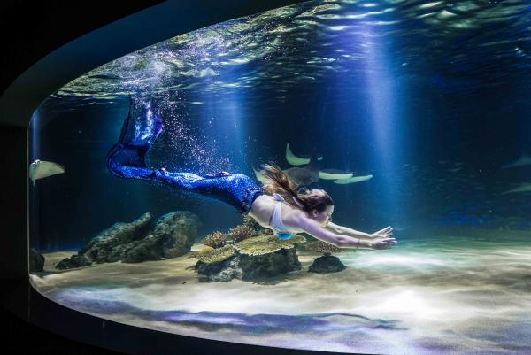 【【藍色海洋的傳說】63 CITY 海洋世界與展望台通票