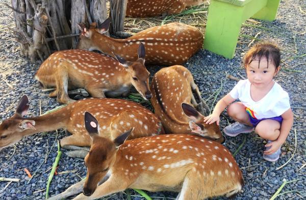 【【觸摸餵食梅花鹿】墾丁鹿境梅花鹿生態園區門票