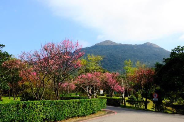 【【台北泡湯推薦】陽明山國家公園溫泉賞花半日遊