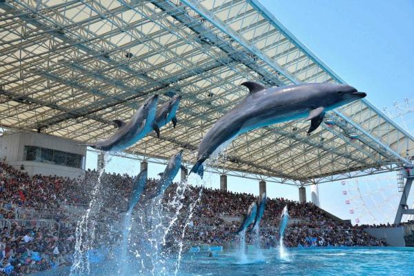 【【世界最大海豚秀】名古屋港水族館門票 (中部國際機場取票)