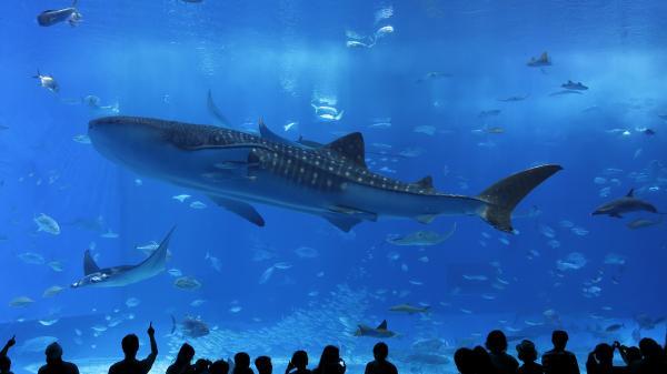 【【沖繩必買票券】沖繩美麗海水族館門票