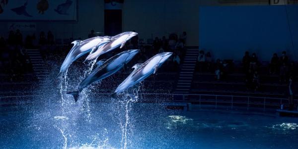 【【東京水族館】Aqua Park 品川水族館門票