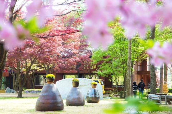 【【首爾近郊一日遊】南怡島、江村鐵道自行車、晨靜樹木園