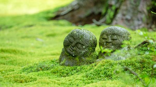 【【京都近郊一日遊】比叡山延歷寺、大原三千院、三千草便當