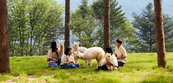 【【草泥馬來了】親親草泥馬牧場、首爾近郊景點、夏季水蜜桃果園一日遊