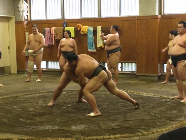 【【東京文化體驗】觀賞相撲選手的晨間練習