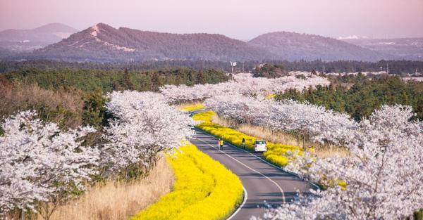 【【暢遊濟州】濟州島中英文私人導遊包車環島旅遊