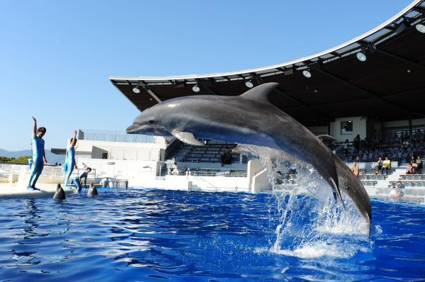 【【日本最大內陸型水族館】京都水族館門票