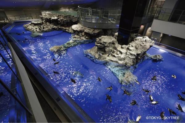 【【東京超人氣景點】墨田水族館